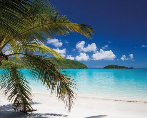 Tropical beach with palm trees and ocean.